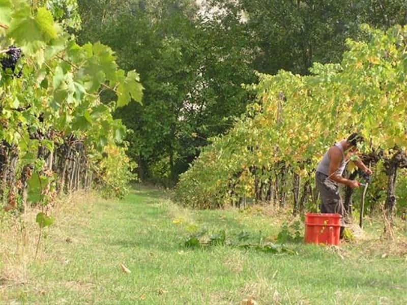 La Collina Romagna Wines Grappa Wines And Local Products In Brisighella Romagna D 39 Este And