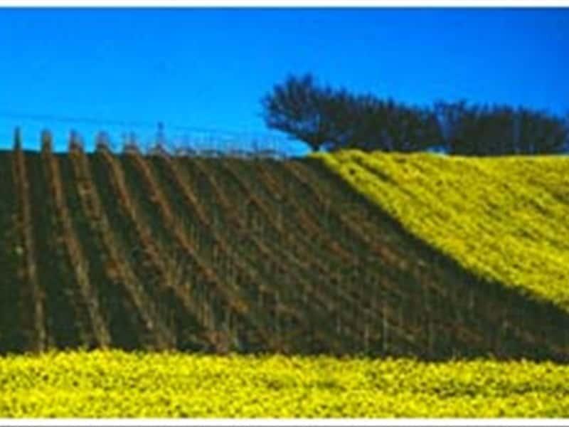 Fattoria Le Terrazze Grappa Wines and Local Products in Numana ...